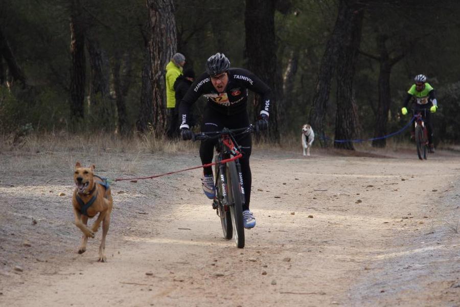El vallisoletano Pablo Enjuto se proclama campeón de España en Bikejoring un perro