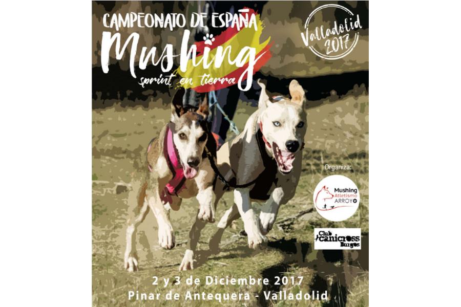 Más de 300 mushing se darán cita en Valladolid en el campeonato de España de Mushing, Sprint en Tierra