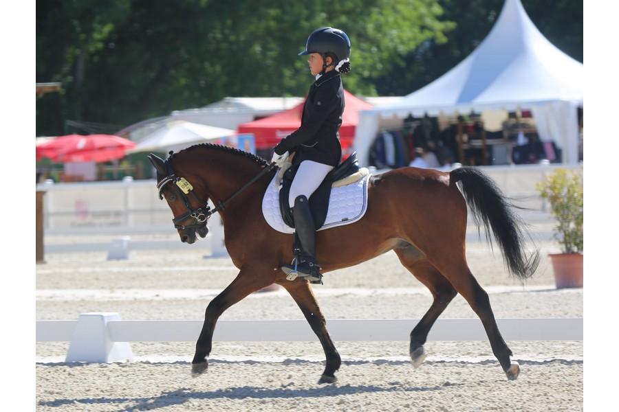 Segovia acoge el XXXIII Campeonato de España de Equitación con Ponis